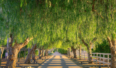 Tree Care: 5 Ways to Keep Your Trees Healthy