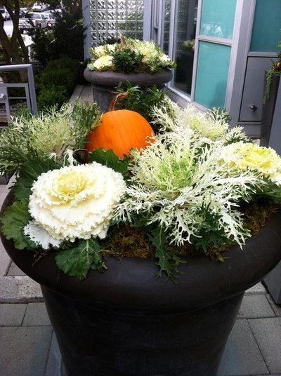 Современный Сад by Glenna Partridge Garden Design