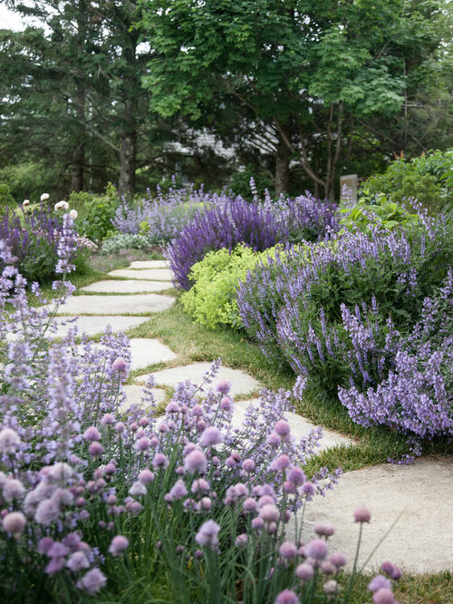 Landscape lavender houzz for Garden design pinterest