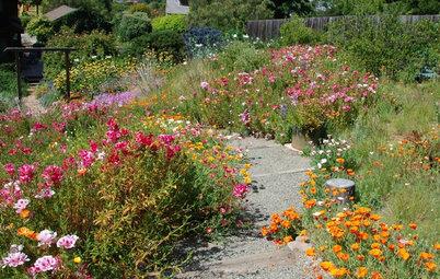 How to Design a Garden for Native Bees