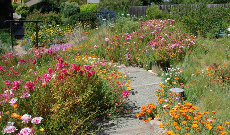 How to Design a Garden for Native Bees