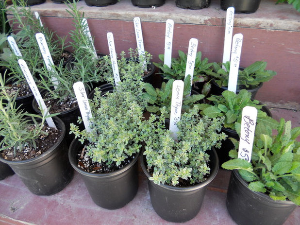 how to grow herbs indoors, Natural flower