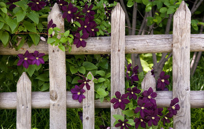 8 Romantic Spring-Flowering Vines to Cover a Trellis