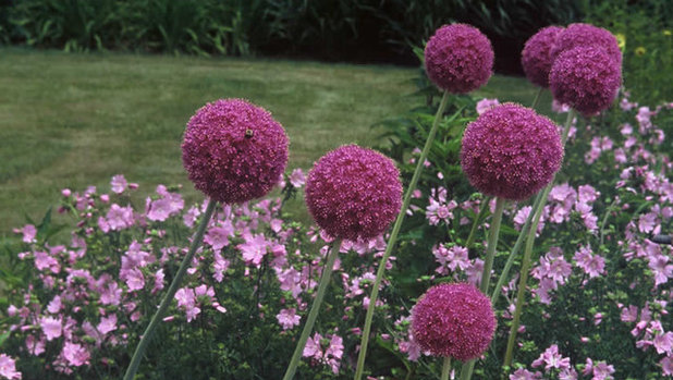6 Unsung Bulbs for Fall Planting