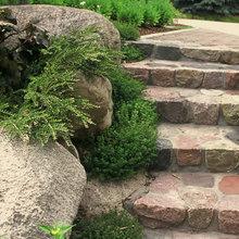 Herb Garden Essentials: How to Grow Thyme