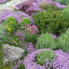 Reasons to Plant Creeping and Ground Cover Plants in Your Garden