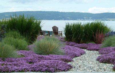 Trädgårdstips: Fixa singelytor som sticker ut i det gröna