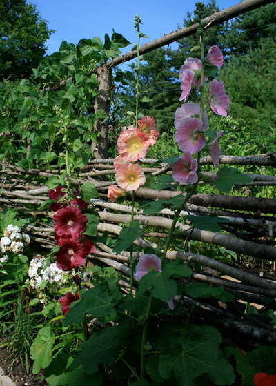 Hollyhocks bring wildlife and old fashioned beauty to the for Garden design kerry