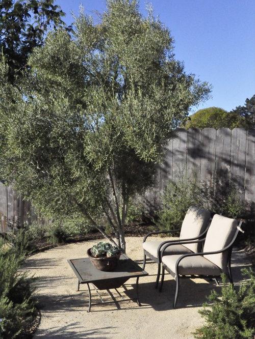 Menu For Olive Garden: Olive Trees