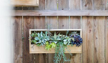 11 idées pour cultiver sur les murs d'un balcon ou d'une terrasse
