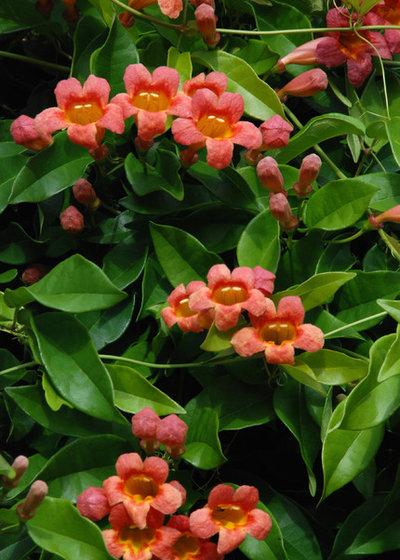 Guida alle piante e ai fiori di agosto for Fiori di agosto
