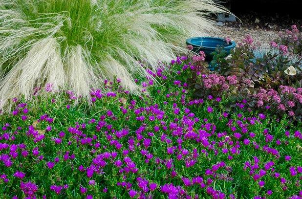 Mediterranean Garden by Sunflower Designs LLC