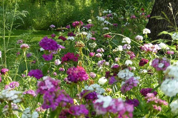 Фото самых красивых садовых цветов 72