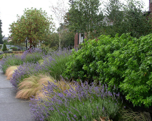 Pacific Northwest Landscaping Ideas Pictures Remodel And