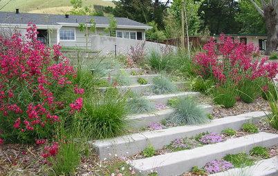 Свободу вьюнку: Украсьте лестницу растениями, и вы не узнаете свой сад