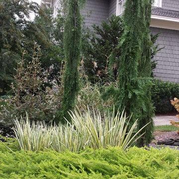 Conifers and iris.