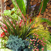 Stretch the Budget, Seasons and Style: Add Conifers to Your Containers