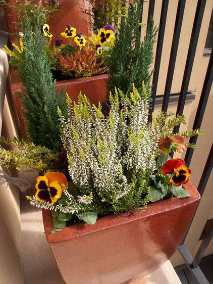Gainesville Landscape Design Plant Of The Month Conifer