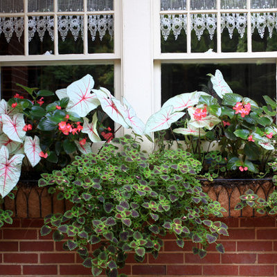 Design ideas for a small traditional shade courtyard landscaping in Atlanta for summer.