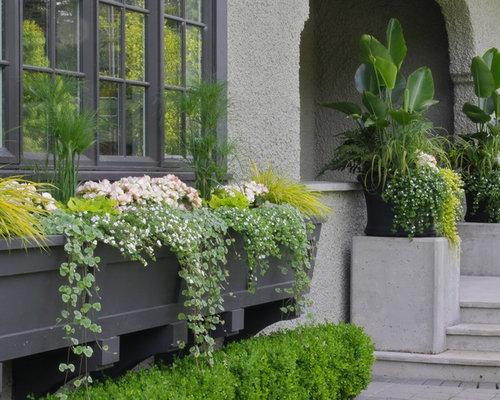 Window Box Plant Design Ideas & Remodel Pictures | Houzz