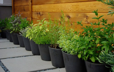 6 Ways to Grow Edibles in Small Places