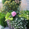 12 Stylish Ways to Plant Your Summer Container Gardens