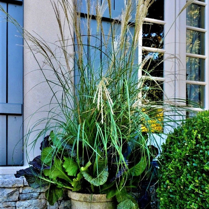 Container Plantings: Autumn and Winter