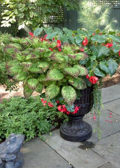 Классический Сад by Tina M. Yotka - Container Gardens Extraordinaire