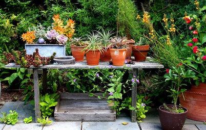 8 fejl du skal undgå, når du dyrker potteplanter