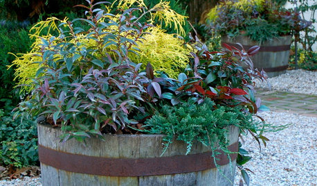 7 Ways to Get Your Container Garden Ready for Winter
