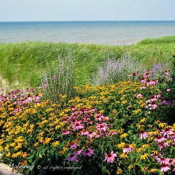 Contemporary Beach Front Garden
