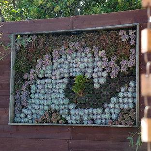 Inspiration for a contemporary garden in San Francisco with a vertical garden.
