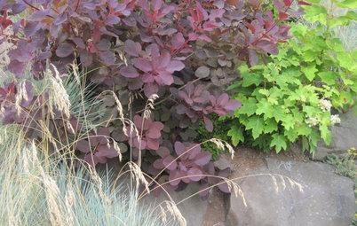 Bring on the Drama With Purple Foliage