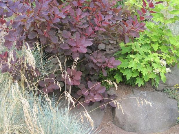 purpleleaf majesties of shrubs, Natural flower