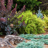 How to Avoid Foliage Monotony
