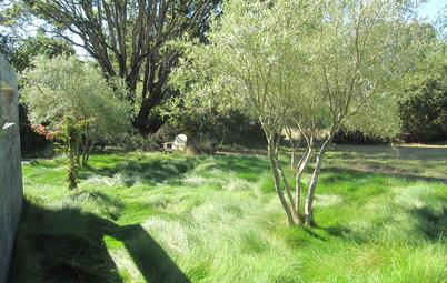 7 Ornamental Grasses for Coastal Gardens