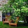 10 árboles y arbustos para jardines pequeños