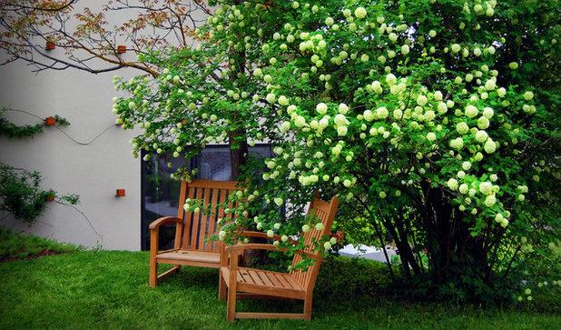 Rboles y arbustos para el dise o de jardines peque os for Arbustos jardin pequeno