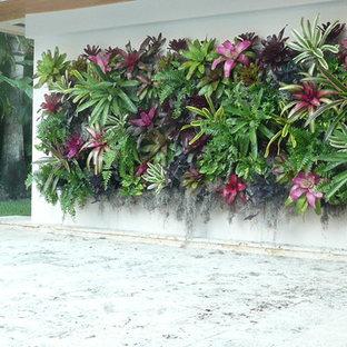 Tropenstil Garten mit Pflanzwand in Miami