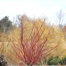 Landscape by U. of Maryland Arboretum & Botanical Garden