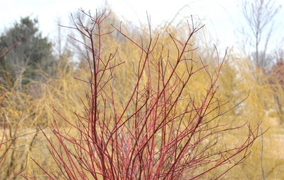Central Plains Gardener's February Checklist