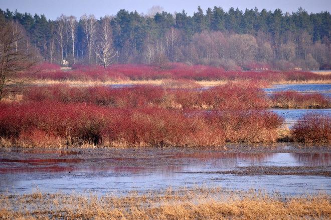 Landscape by m.kotiuk