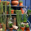 Cascading Succulents Bring Fun Shapes to Your Indoor Garden