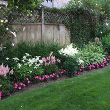 Houzz Cotton Candy garden photo,  my Rose List