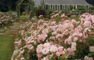 Flowers and Foliage That Bring Fragrance Into Your Garden
