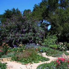 Mediterranean Landscape by Donna Lynn - Landscape Designer