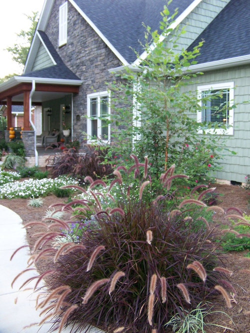 Purple fountain grass houzz for Purple grasses for landscaping