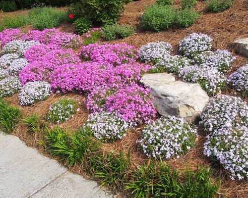 Landscaping A Sunny Hillside : Sunny steep hillside along driveway