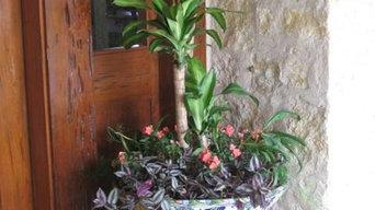 Custom Container Arrangements-Sedums/Succulents