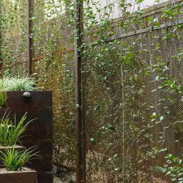 Custom Steel Privacy Screens Planted with Star Jasmine Vines